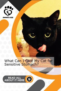 Maybe your cat need special cat food? Get more information at AnimalsA2Z.com. Canned Cat Food, Dry Cat Food, Cat Health, Health Tips, Best Cat Food, Cat Nutrition, Stomach Problems, Peppermint Tea, Cat Treats