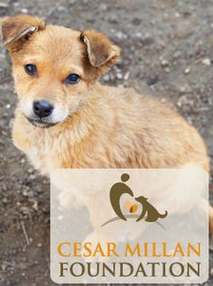 Donate to the Cesar Millan Foundation for Father's Day (the dog whisperer) | Support the rescue, rehabilitation, and re-homing of abused and abandoned dogs.