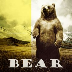 Bear  animal photograph  typography  fine art by ZenzPhotography