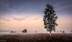 Upcoming Mist at the Mechelse Heide