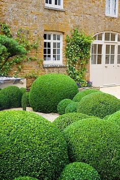Cloudy box and pines Small Garden Shrubs, Boxwood Garden, Garden Hedges, Topiary Garden, Garden Balls, Cloud Pruning, Formal Garden Design, Architectural Plants, Front Gardens
