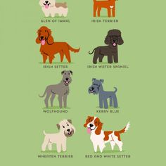 Dogs-Of-The-World-Cute-Poster-Series-Shows-The-Geographic-Origin-Of-Dog-Breeds7__880