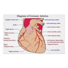 Arteries Remedies Diagram of the Coronary Arteries of a Human Heart Poster - Shop Diagram of the Coronary Arteries of a Human Heart Poster created by chartsanddiagrams. Personalize it with photos Cath Lab Nurse, Heart Catheterization, Cardiac Catheterization, Ekg Interpretation, What Is Nursing, Masters Degree In Nursing, Heart Diagram, Nursing School Prerequisites, Online Nursing Schools