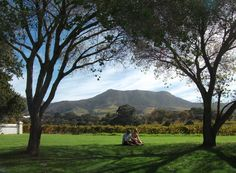 The 2012 Constantia Food and Wine Festival at the The beautiful Constantia Uitsig vineyard
