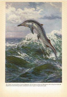 Prehistoric Sea Monster Book Print. Ichthyosaurus. Mixosaurus. 1965. by DustCoverPaperati on Etsy