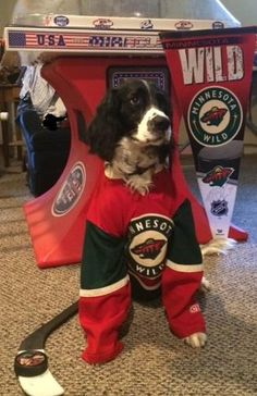 Sarge is Wild about hockey! Thanks @Hockeyjoe123 for the photo. #HockeyPets
