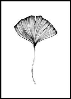Ginko Leaf Poster i gruppen Posters / Botaniska hos Desenio AB Beauty Illustration, Leaf Illustration, Flor Tattoo, Gold Poster, Arte Ninja, Buy Posters Online, Plakat Design, Leaf Drawing, Ink Drawings