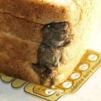 Man Finds Dead Mouse In Loaf Of Bread. a man got the shock of his life when he opened a loaf of bread and found a whole mouse inside. Stephen Forse had already used some slices when he came across… Continue Reading → Dead Mouse, Everyday Food, Allrecipes, Banana Bread, At Least, Take That, Make It Yourself, This Or That Questions, Baking