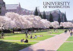 University of Washington . Toxic - Rachel Van Dyken