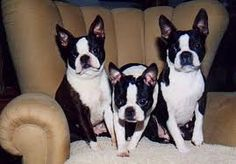 Three's company! Max & Brinkley need a little brother or sister :))