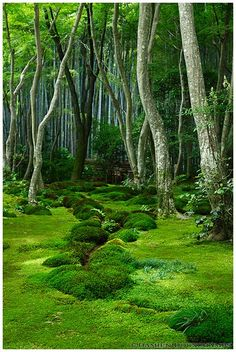 Moss garden in Giyo-ji temple (祇王寺) I just want this to be my backyard. Moss garden in Giyo-ji te Beautiful World, Beautiful Gardens, Beautiful Places, Beautiful Beautiful, Shade Garden, Mother Earth, Garden Inspiration, Painting Inspiration, Beautiful Landscapes