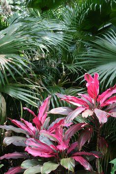 Subtropical colour.