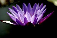 Purple Reign  #flowers
