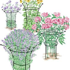 Tall Essex Plant Supports-Elegant Plant Supports Keep Flowers Standing (4.5), Read 271 Reviews Exclusive Item # 37-423VS $29.95 - $69.95 Select S-XL Attractive plant supports hold flowers in a graceful shape & prevent flopping  Made w/ long lasting, heavy-duty, powder-coated steel Small Supports sold in sets of 2- M, L & X-L Supports sold individually