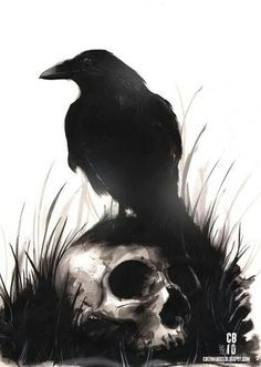 Raven and skull                                                                                                                                                     More
