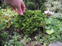 The Mini Garden Guru - Your Miniature Garden Source