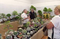 Po kliknutí na obrázok sa presmeruje na fotogalériu Kaktusy Succulents, Table Settings, Plants, Succulent Plants, Place Settings, Plant, Planets, Tablescapes