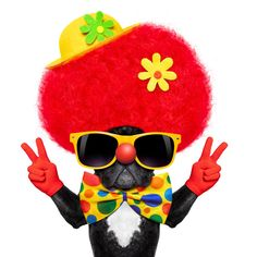 Find Silly Dog Wearing Clown Costume Peace stock images in HD and millions of other royalty-free stock photos, illustrations and vectors in the Shutterstock collection. Content Marketing, Digital Marketing, Business Marketing, Silly Dogs, Pet News, Great Inventions, Pet Costumes, Social Media Tips, Your Pet