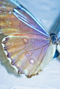 Pin by Ana on mariposas in 2020 Papillon Butterfly, Butterfly Kisses, Butterfly Wings, Blue Butterfly, Spiritus, Beautiful Butterflies, Jewel Tones, Faeries, Holographic