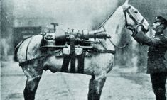 Churchill's mission to rescue the war horses and how he made officials bring tens of thousands home