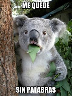 koalas are funny. koalas are smart. koalas are so cute. koalas are brave. koalas are herbivores. Funny Cute, Funny Memes, Funny Stuff, Lds Memes, Super Funny, Hilarious Jokes, Funniest Memes, Stupid Jokes, Funny Animal Pictures