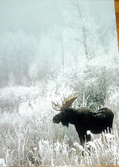 In Michigan.  Moose. (Have never seen a moose in Mi. Correct me if I'm wrong.)