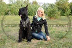 Giant Schnauzer (Riesenschnauzer) Breed Standard : Dog harness ...