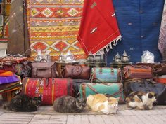 Essaouria, Morocco. - Cats at a market; just as colorful as the merchandise.