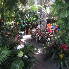 Looking for good plants at good prices? The Plant Factory Outlet sells to the public at wholesale prices. Street Trees, Cool Plants, Places To See, Garden Sculpture, Nursery, Brisbane, Outdoor Decor, Luxury, Baby Room