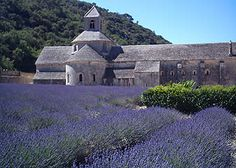 Google Image Result for http://www.avignon-et-provence.com/tourisme-provence/provence-tours/img/tour-provence-senanque-02.jpg