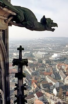 Can you believe it - I grew up in the shadow of the the world's highest #churchtower and I've never been up there.  Ulm cathedral gargoyles