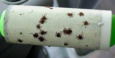 Roll your clothes with a lint roller after being in the woods to get hiding ticks.these are the BEST Camping Hacks, Gear, and Tricks! Things To Take Camping For A Baby Camping Hacks, Camping Glamping, Camping And Hiking, Camping Survival, Camping Life, Family Camping, Camping Gear, Outdoor Camping, Camping Essentials