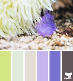 color sea