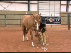 Horse Training - Proper Technique to Laying Your Horse Down and how to bow! All horses take the same Bit: a Bit of knowledge Cowboy Horse, My Horse, Horse Love, Horse Riding, Trail Riding, Horse Training Tips, Horse Tips, Pretty Horses, Beautiful Horses