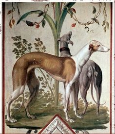 Greyhounds were very popular in the Middle Ages and Rennaisance with Nobility
