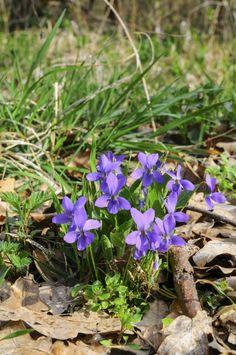 Az ócsai láperdőből már csak a tündérek hiányoznak Lily, Marvel, Plants, Orchids, Plant, Lilies, Planets