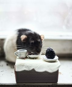 There are a different type of animals, you will find in your environments. The link exposes some fascinating photos of amusing and adorable rats. Normally, rats Animals And Pets, Baby Animals, Funny Animals, Cute Animals, Hamsters, Rodents, Rata Dumbo, Beautiful Creatures, Animals Beautiful