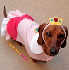 Princess Peach dog costume for Oscar. @Kimberly Koskinen