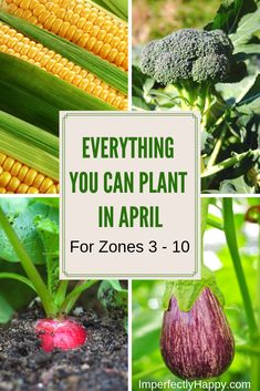 You Should Plant in April Zones 3 - 10 Everything You Can Plant in April for Zone 3 - 10 in your vegetable garden. Plan for your spring garden now!Everything You Can Plant in April for Zone 3 - 10 in your vegetable garden. Plan for your spring garden now! Vegetable Garden Planner, Veg Garden, Garden Types, Lawn And Garden, Garden Plants, Spring Vegetable Garden, Fruit Garden, Planting A Garden, Indoor Vegetable Gardening