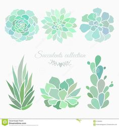 Image result for succulent vector graphic