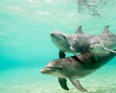 Delfines / Dolphins