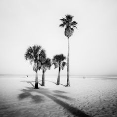 Florida Usa, Florida Beaches, Fine Art Photography, Landscape Photography, Panorama Camera, Palm Trees Beach, Black And White Landscape, All Pictures, Fine Art Paper