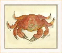 From our new Kolene Spicher beach art collection - #CBH
