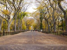 Photographing in #CentralPark today. Gorgeous #autumn day! #crunchingleaves #yellow #green #fall13 #AW13 #paintedreality