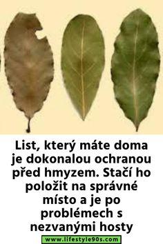 Samos, Plant Leaves, Plants, Plant, Planets