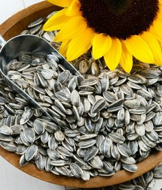 Can dogs eat sunflower seeds? Yes and watermelon without seed and rind.