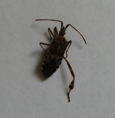 Bugs That Look Like Roaches