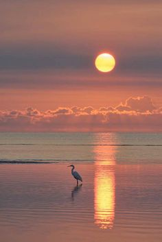 Under a Southern Sun . Egret at dawn in a tidal pool at Beachmere, Queensland, Australia -- by Robert Charity on Nature Pictures, Beautiful Pictures, Sunrise Pictures, Image Nature, Nature Nature, Ocean Sunset, Sunrise And Sunset, Ocean Beach, Amazing Sunsets