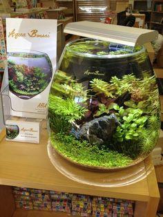 What Is Aquaponics Farming Water Terrarium, Aquarium Terrarium, Terrariums, Mini Aquarium, Garden Terrarium, Planted Aquarium, Terrarium Jar, Aquascaping, Cool Fish Tanks