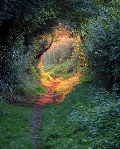 Beautiful Forest, Beautiful Places, Peaceful Places, Beautiful Pictures, Modern Magic, Forest Path, Dark Forest, Nature Aesthetic, Fantasy